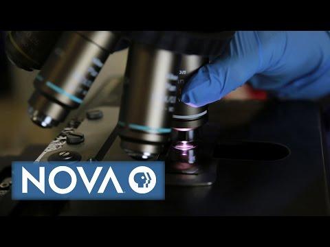 What Makes Science True?   NOVA