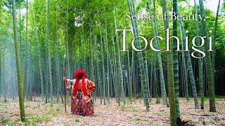 Sense of Beauty | The Grace of Japan, TOCHIGI