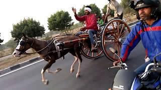 Jaipur Horse Race New Video 2018