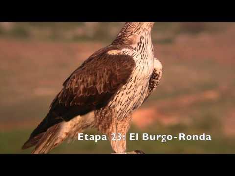 Aves de la Gran Senda de Málaga (GR 249). Etapas 18 a 26