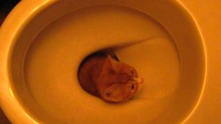 Смешной кот сантехник.Funny cat plumber
