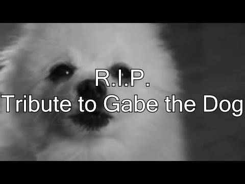 R.I.P. Gabe The Dog (Tribute)