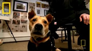 Dog Surgery   National Geographic thumbnail
