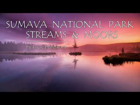 Admire the Mystical Streams and Moors of Czechia in 4K