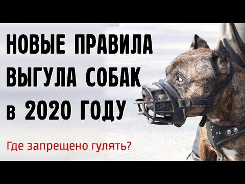 Новые правила выгула собак в 2020, где можно гулять без намордника?