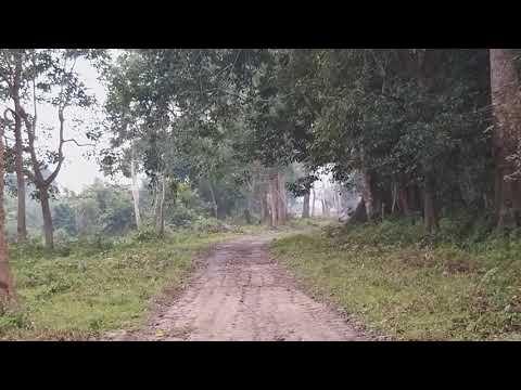 Rhino mating in Agoratoli range, Kaziranga National Park (Part 2)