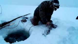 Енисей ловля налима зимой на