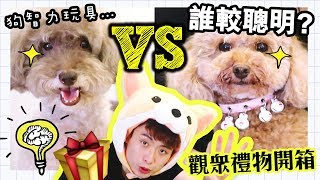 【🐶MUFFIN和BROWNIE誰較聰明?】🎁觀眾禮物開箱!測試狗狗智力玩具?(中字)