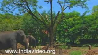 Punnathoorkotta, an elephant caring centre