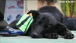 У Еквадорі провели на пенсію поліцейських собак (відео)