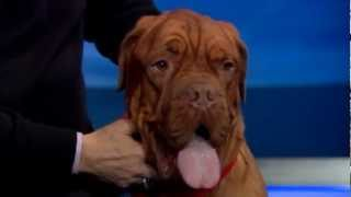 WPXI- 'National Dog Show' hosts say competition to be largest in show history