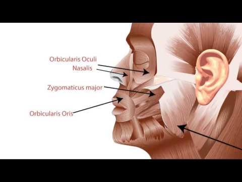 Slendertone Face Elektrostimulator (Bewegung der Muskeln) - Produktvorstellung