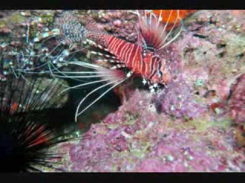 Socotra Diving, Socotra,Jemen