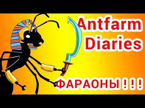 Спешите видеть! Гнездо фараоновых муравьев!!! (Monomorium pharaonis)