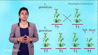 Mendel's Experiment | Monohybrid Cross | Law Of Segregation