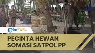 Viral Video Oknum Satpol PP di Aceh Singkil Siksa Anjing hingga Tewas, Pecinta Hewan Beri Kecaman