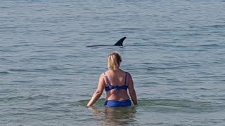 Как поймать дельфинов афалина в черном море