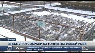 Названа причина массовой гибели рыбы в Урале