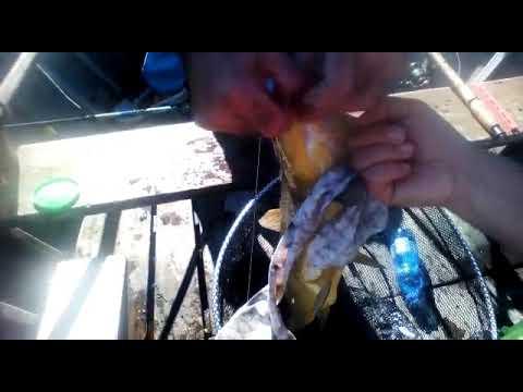 Ul che pesca in Minsk