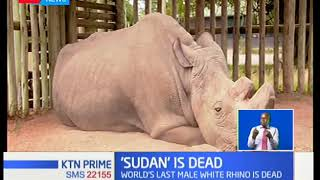 The last male northern white rhino Sudan has died at the age of 45