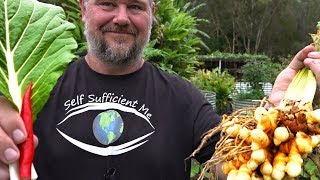 Grow Food All Year Round   Transitioning from Summer to Winter