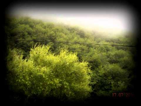 deep forest muse V2