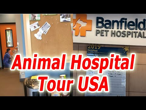 Animal Hospital Tour USA | Extremely Friendly Doctors in Animal Hospital USA | Cat Rabies Shot Cost