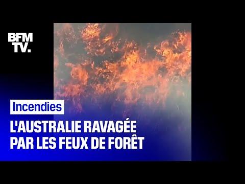 Plus de 80 départs de feux, dont certains d'origine criminelle, ont été répertoriés en Australie Plus de 80 départs de feux, dont certains d'origine criminelle, ont été répertoriés en Australie