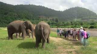 Singing to elephant