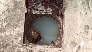 Moradora cobra da Copasa solução para esgoto que corre dentro de casa e em rua no Nossa Senhora Aparecida