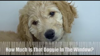 HOW MUCH IS THAT DOGGIE IN THE WINDOW - Children's Song l Lyrics
