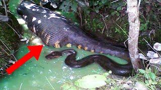8 Most DANGEROUS Freshwater Creatures!
