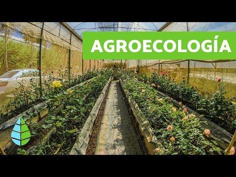 Fotograma del vídeo: Qué es la Agroecología - Agroecologia características