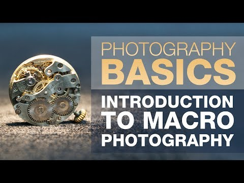 Introduction to Macro Photography