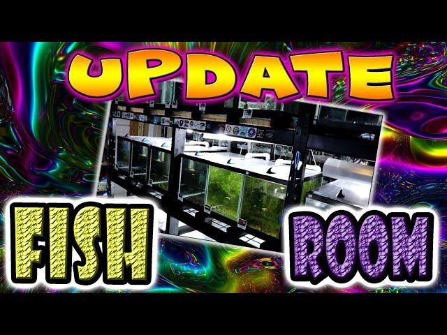 Breeding for Profit- Fish Room Update 2018 Guppies, Guppies and more Guppies