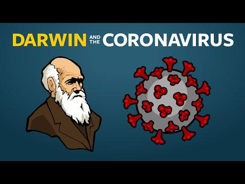 Pinworm ul poate infecta oamenii cu enterobioza