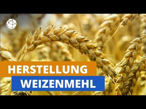 Wie wird aus Weizen Mehl? | frage-trifft-antwort.de | Planet Schule