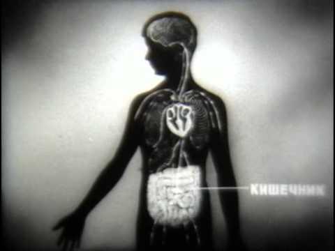 Как определить наличие паразитов в организме и лечение