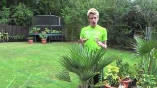 Potting Up Palms | Jack Shilley