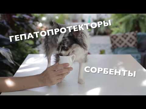 Схема выведения глистов у собаки в домашних условиях | Чихуахуа Софи