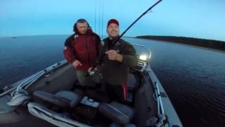 Ловля сома на рыбинке