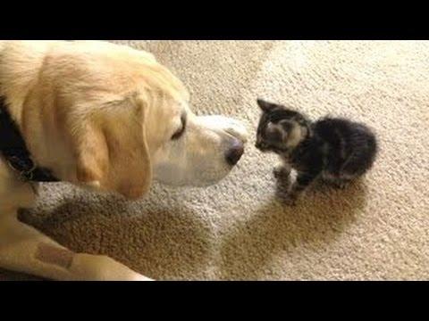 Adorables Perros Conocen a Gatitos Por Primera Vez