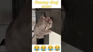 funny cats and dogs 🤣🤣#Shorts