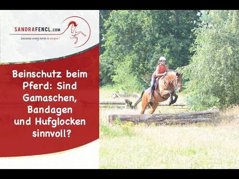 Beinschutz beim Pferd: Sind Gamaschen, Bandagen und Hufglocken sinnvoll?