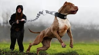 10 Dog Breeds That You Should Fear The Most