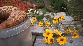 Маленькая тайна урожайных огурцов видео
