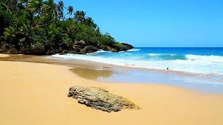 8 Hrs of Ocean Sounds for Sleeping, Meditation, Yoga on a Tropical Beach