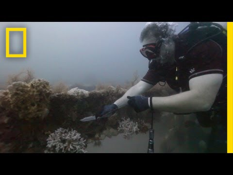 Divers Clean Reefs to Save Marine Life | National Geographic thumbnail