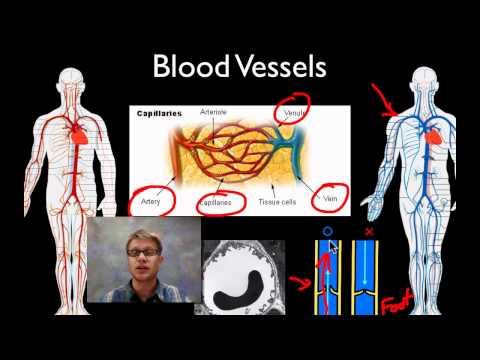 แพทย์ผ่าตัดหลอดเลือด Sklifosovsky