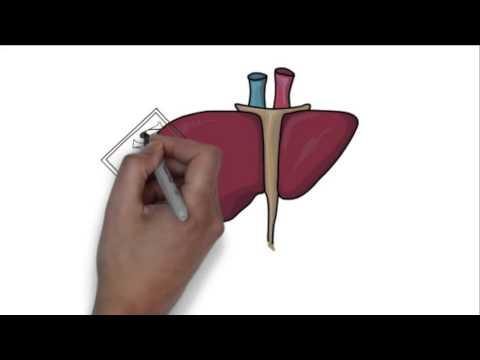 Гепатита в и цефтриаксон